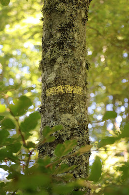 signalétique sur arbre