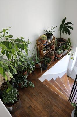 plantes dans la cage d'escalier